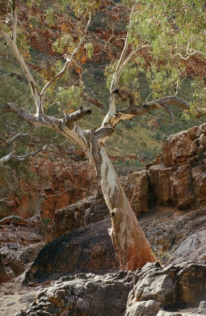 Green in the Red Centre, Alice Springs 1998