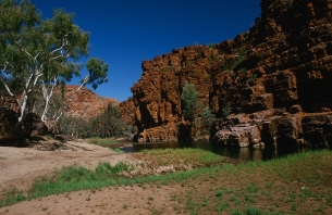 View from the swag, Alice Springs